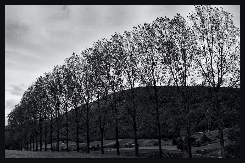 19 Trees