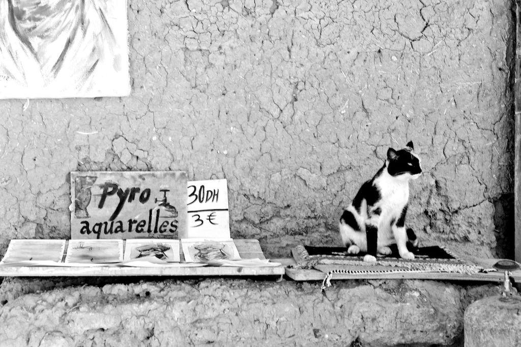 Morocco Study- A Salescat