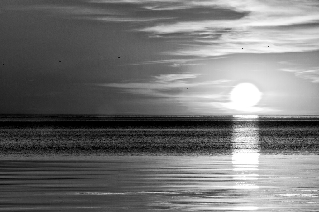 Sun rise and 6 birds