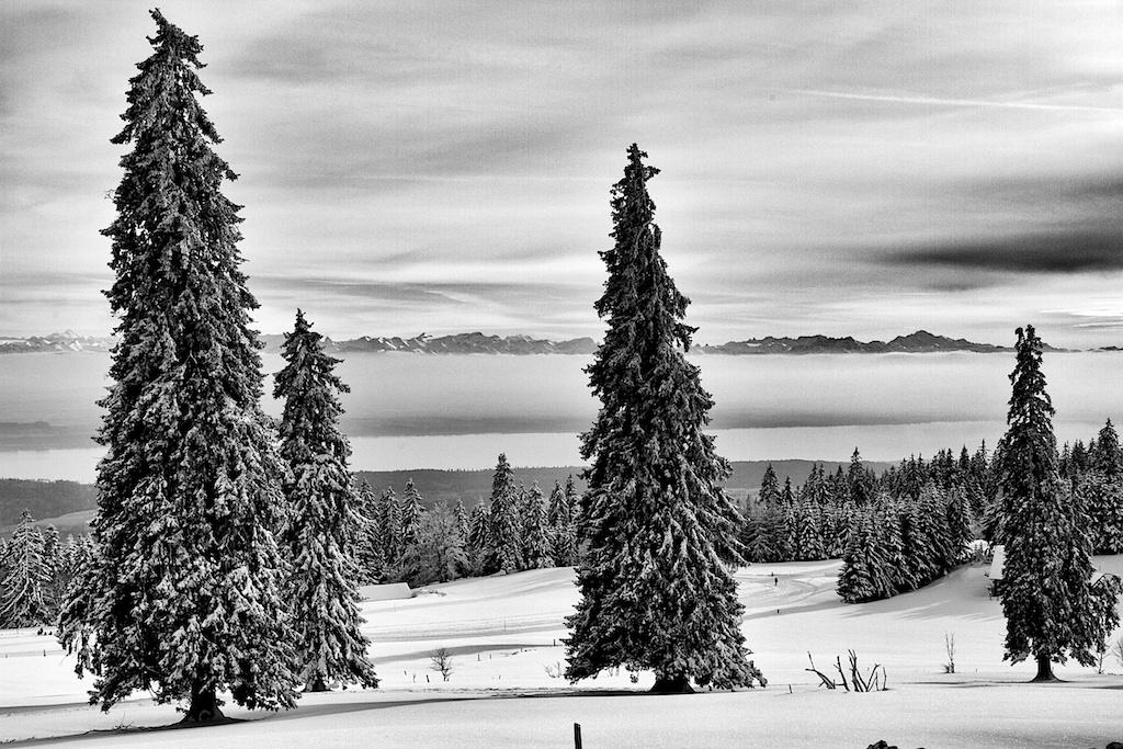 Vue Des Alps-study 2