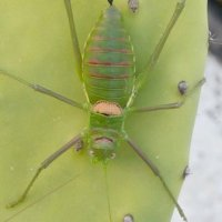 Big insect