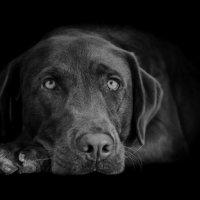 Dog Portrait (P2)