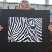 Eye of a Zebra (P3)