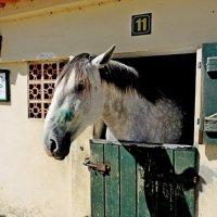 Lusitania horses
