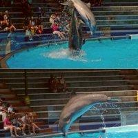 Dolphin activities