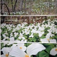 Ontario Spring