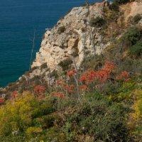 Cliff Fauna