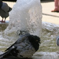 Pigeon Fountain