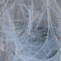 Roger - Web