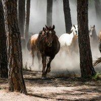 Andalusian Horses [P1]