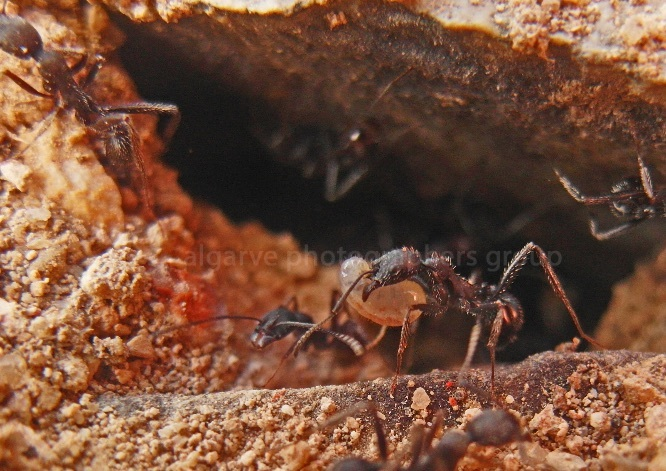 Alarm in the Ants' Bunker