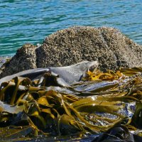 Seal New Zealand