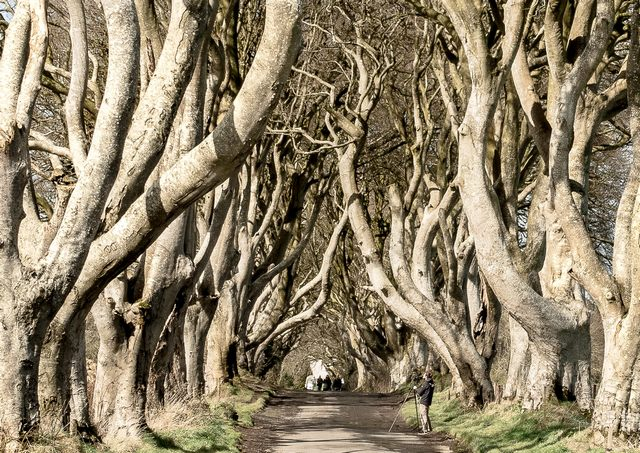 The Dark Hedges, N.I (P1)