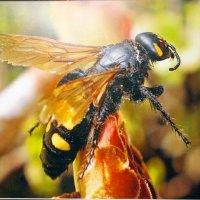 Wasp [P2]