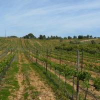 Winery 01