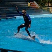 Riding a dolphin