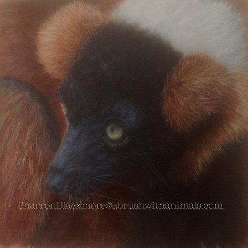 Red Ruffed Lemur (SOLD)