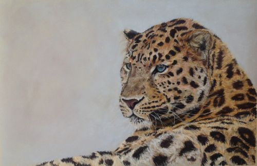 The Surveyor (Amur Leopard). (Sold)