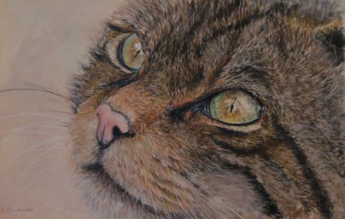 Last of the Winter Sun (Scottish Wildcat) (SOLD)