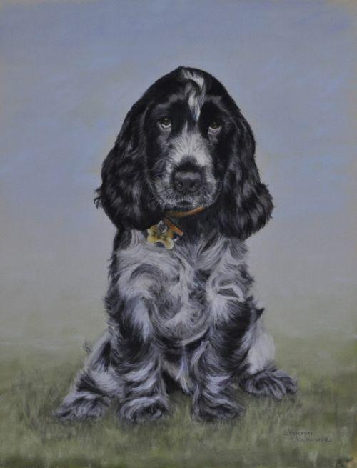 Cocker pup  (Sold)