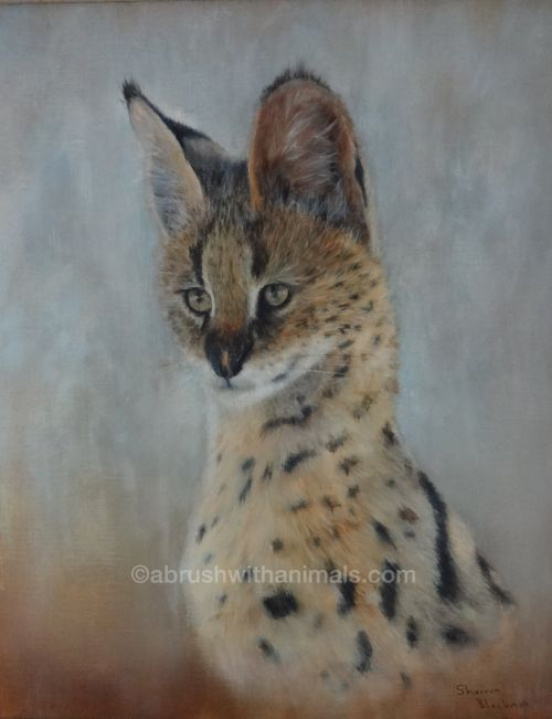 Young Serval