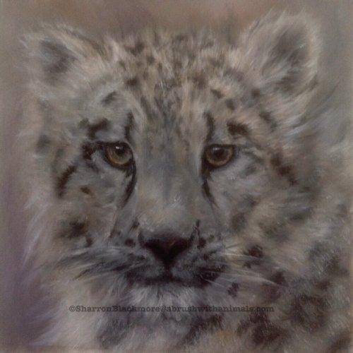 Snow leopard cub (SOLD)