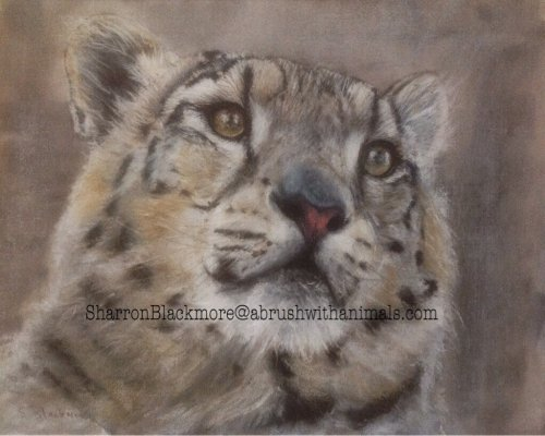 Snow Leopard (SOLD)