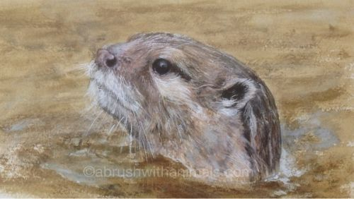 Otter (Sold)