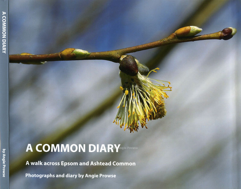 A Common Diary