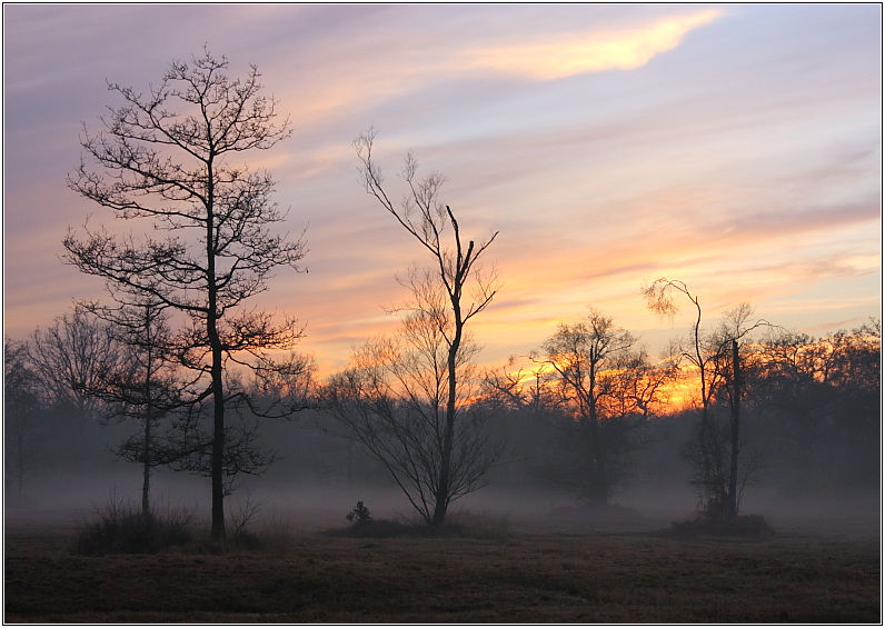 Misty Sunset, Royal Common, Elstead I
