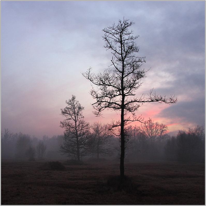 Misty Sunset, Royal Common, Elstead II