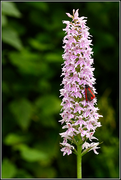 1 Cinnabar Moth, and 5 other insects