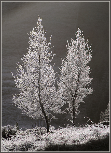 Hoar Frost - Christmas Day 2005