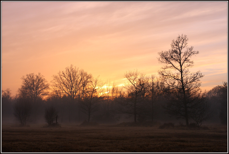 Misty Sunset, Royal Common, Elstead III