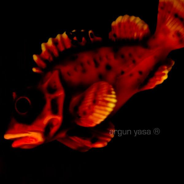 fishrabbit#01