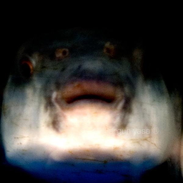 fishrabbit#02