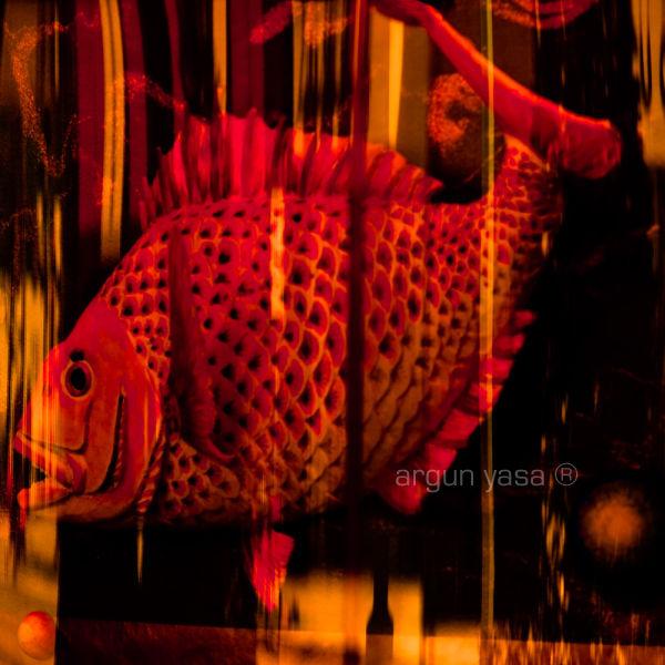 fishrabbit#05