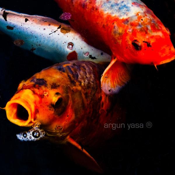 fishrabbit#06