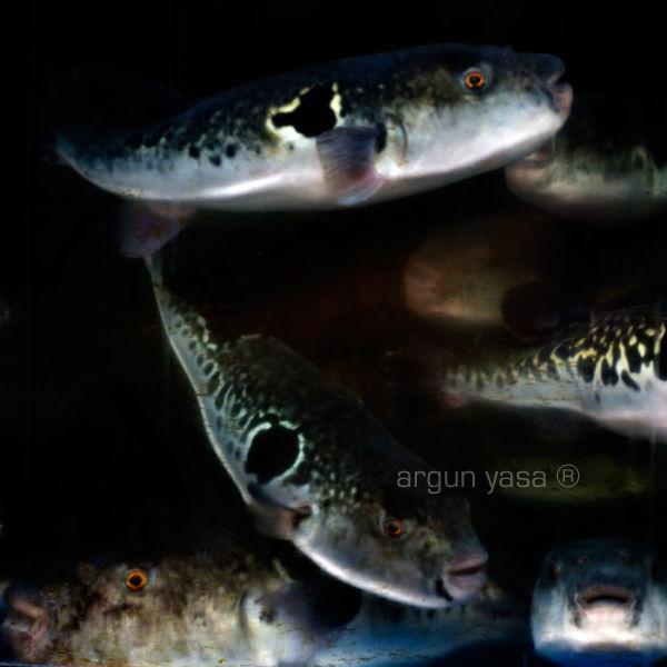 fishrabbit#10