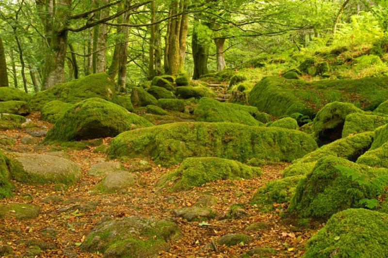 It's Abit Green Here