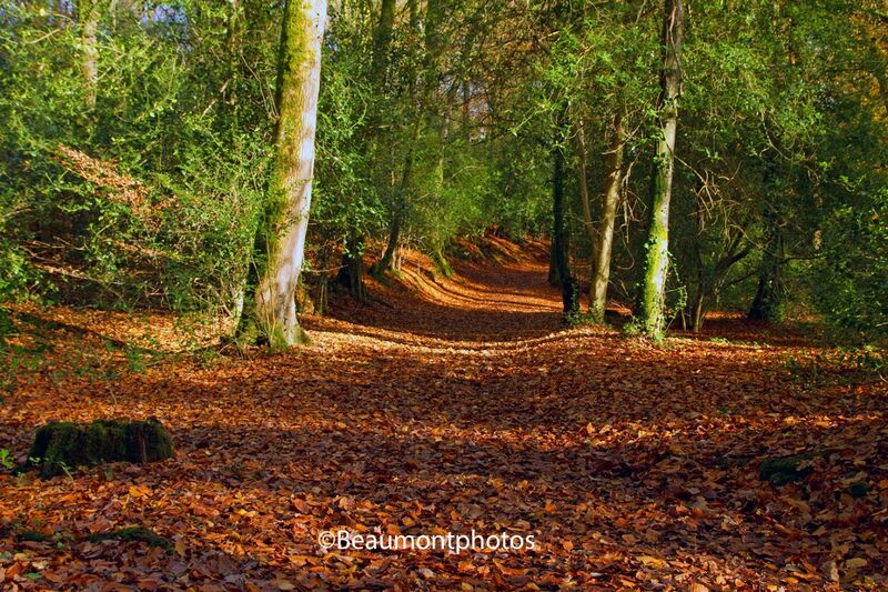 Lane of a Thousand Leaves