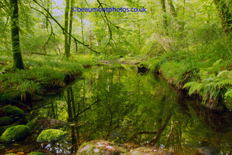 Lost Pond Reflection
