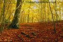 Milber Woods 1