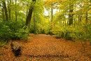 Milber Woods 3