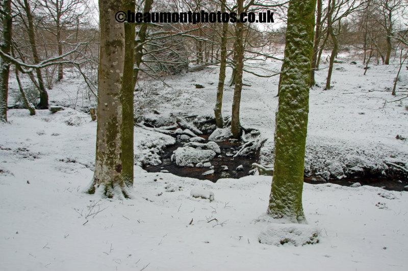 Snow Tree Framed