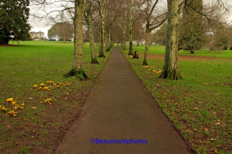 Spring Lined Walk