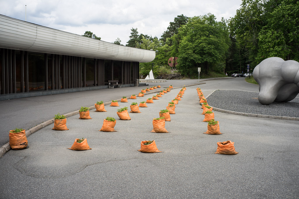Rows of Bags