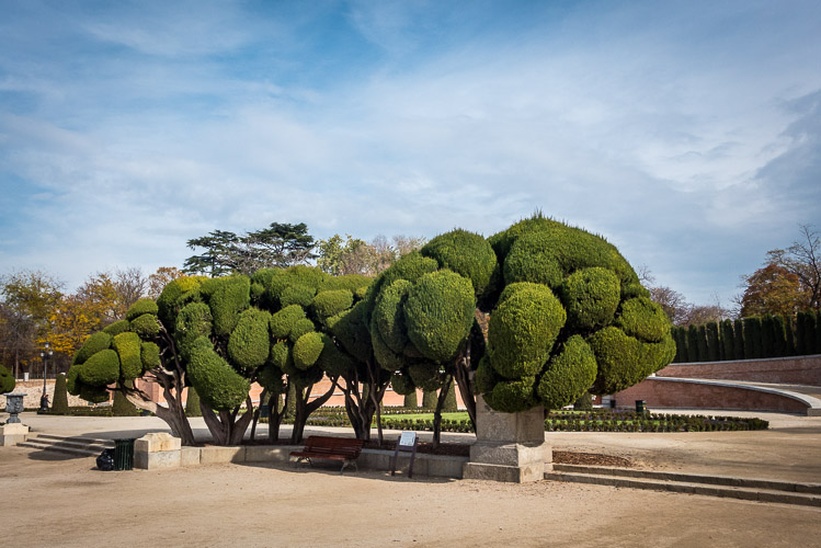 "The ""Broccoli"" Tree"