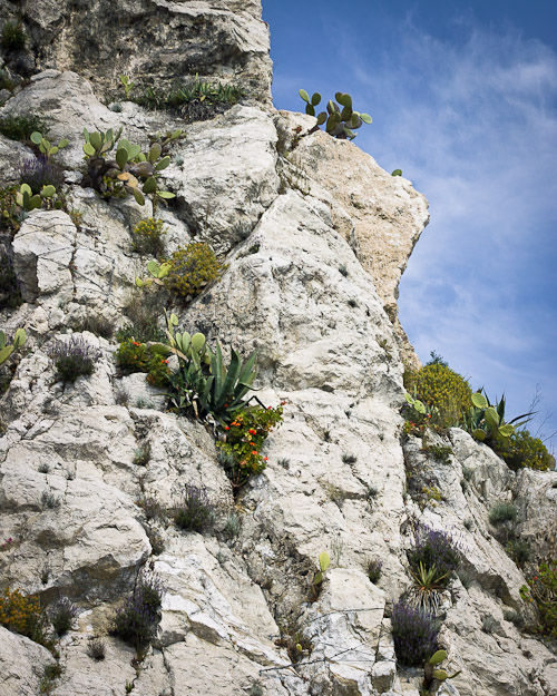 Nice - White Cliff