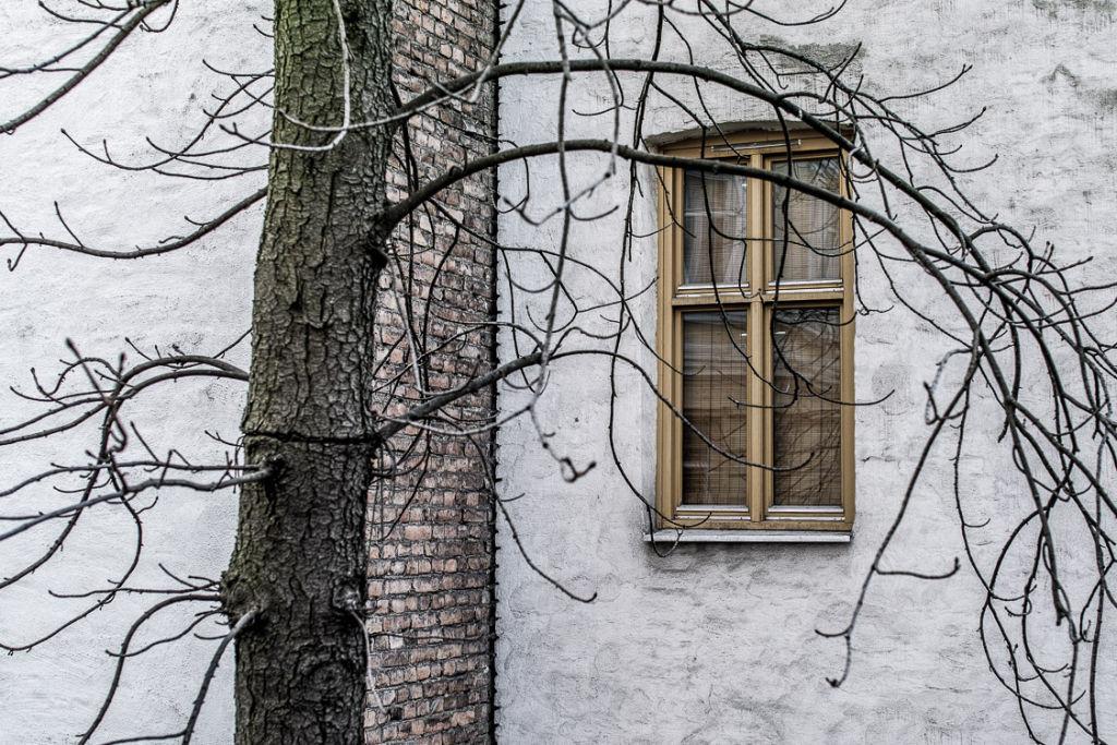 Window with Tree